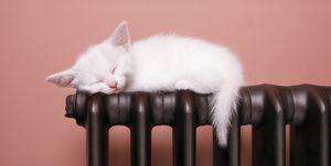 Gato durmiendo sobre un radiador
