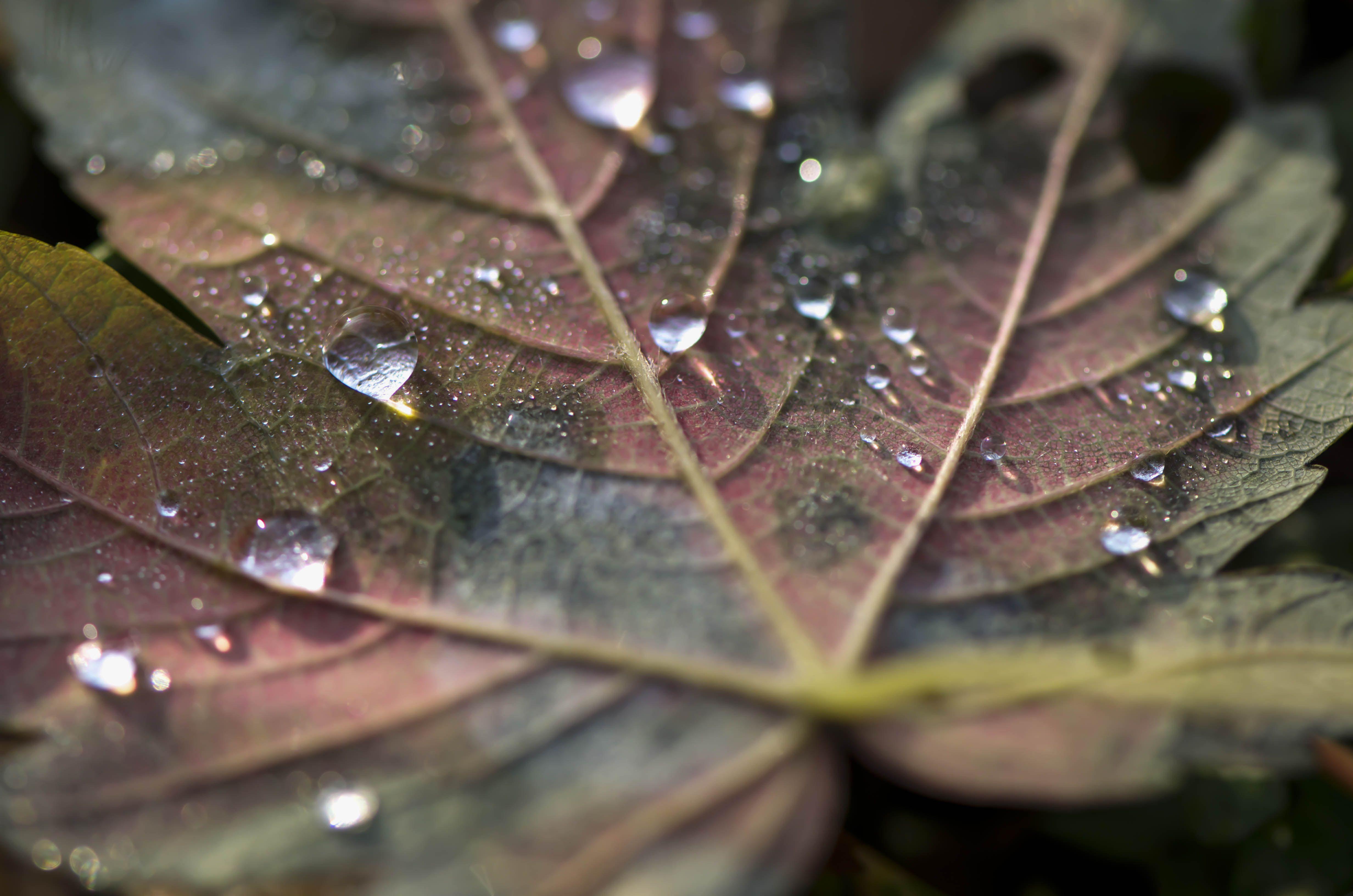 Raindrops on winter leaves photo