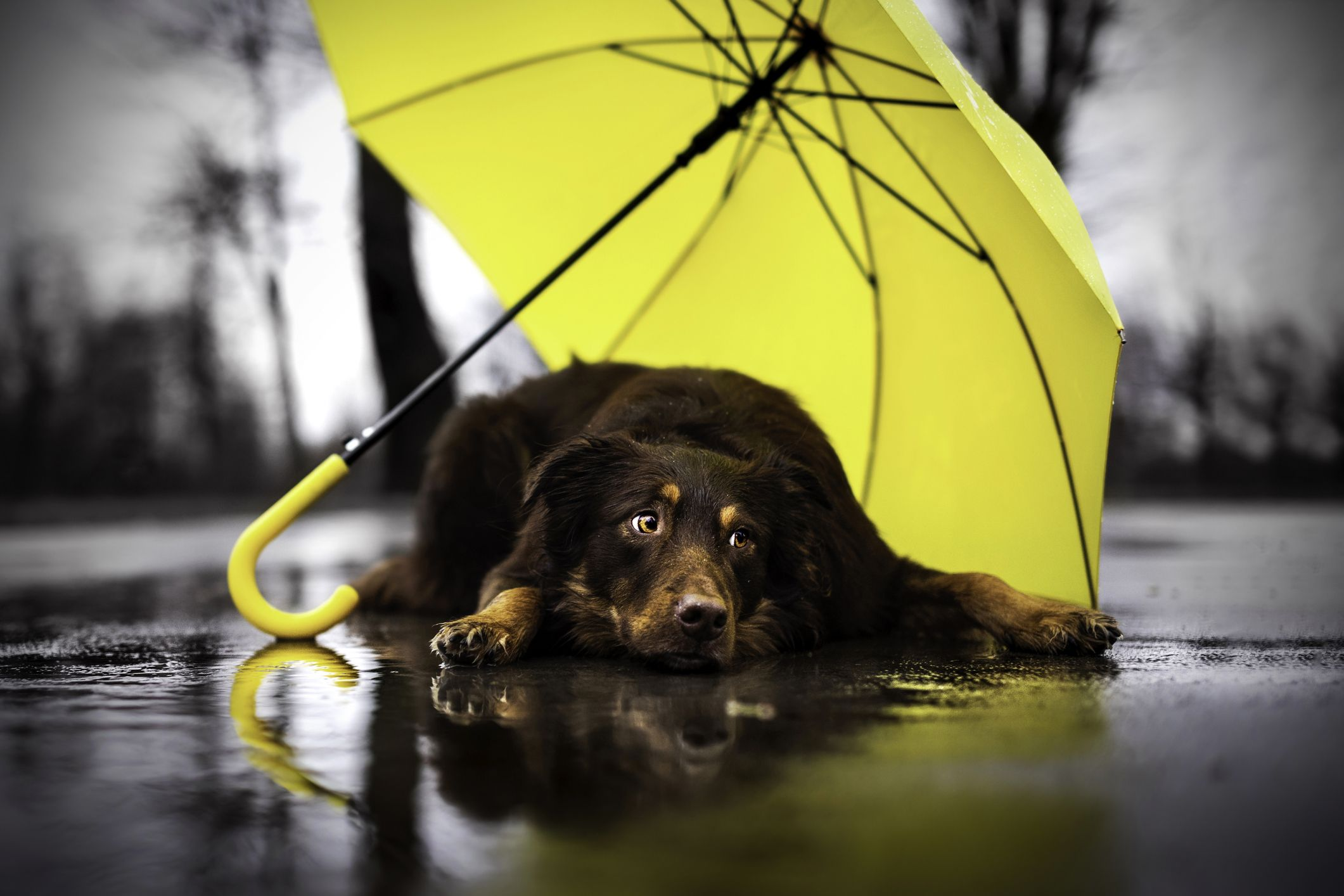 7 things to remember when walking your dog in rain and floods