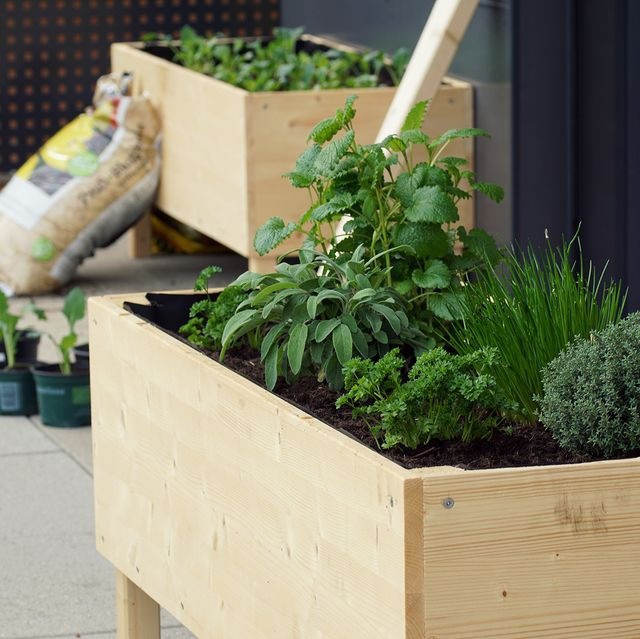 raised garden bed with herbs