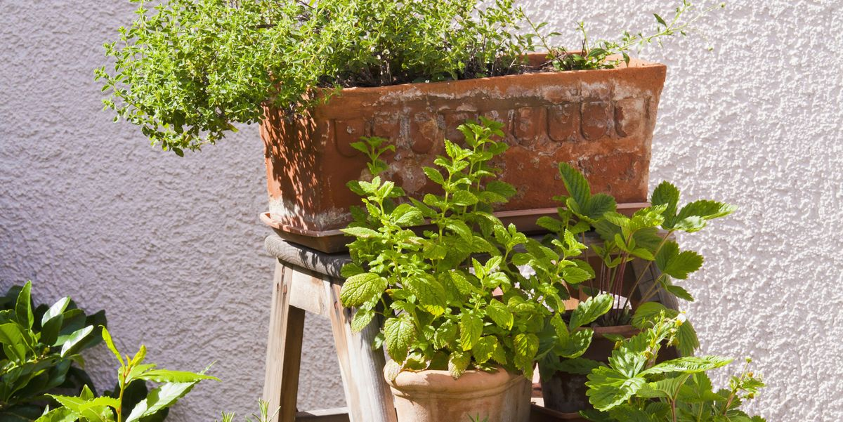 15 Inexpensive Raised Garden Bed Ideas That You Can DIY in No Time