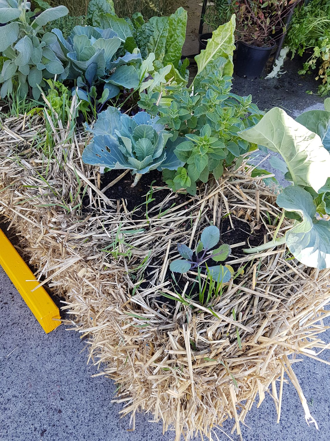 Straw Bale Gardening Is Easier Than You Think—Here's What to Know