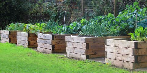 raised garden beds - Garden Bed