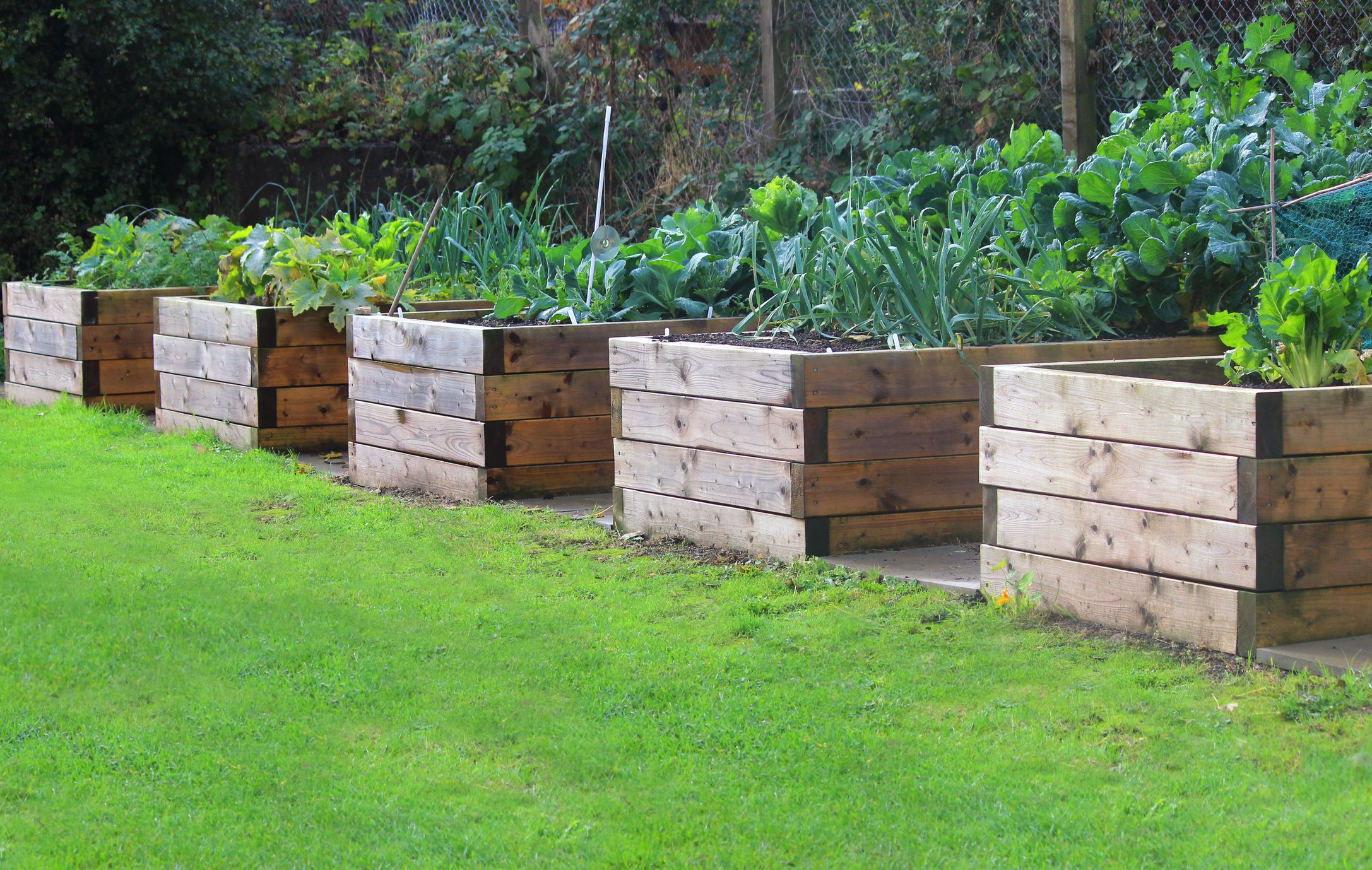 Picture of: How To Build A Raised Garden Bed Diy Raised Bed Instructions