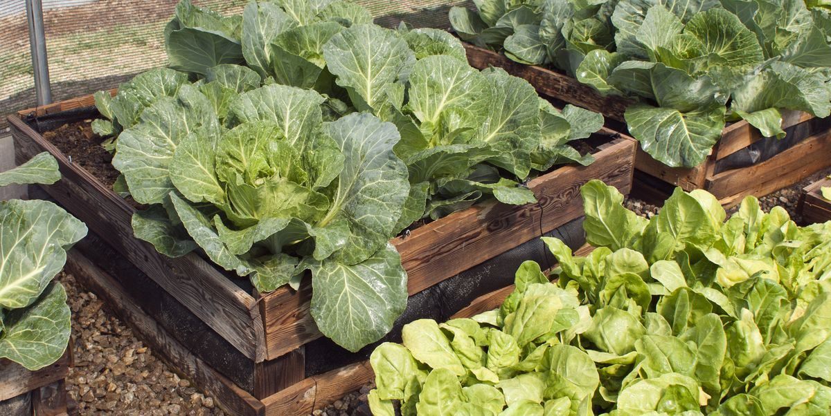 These Raised Garden Beds Will Get You in the Gardening Spirit