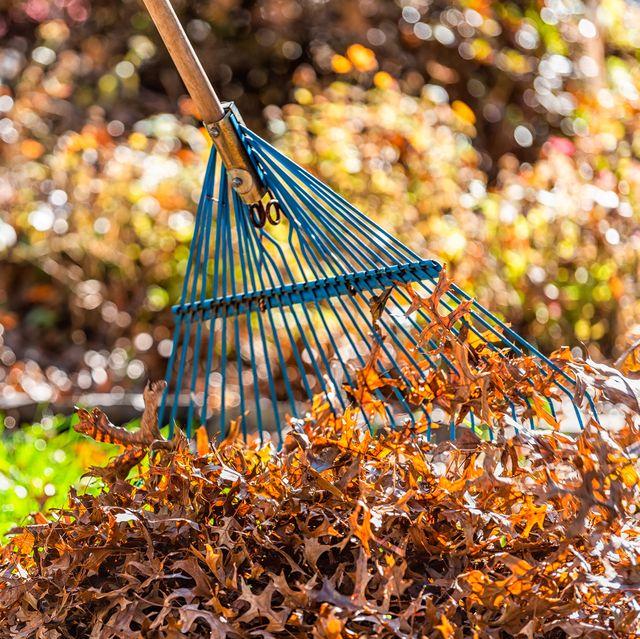 person raking leaves in yard