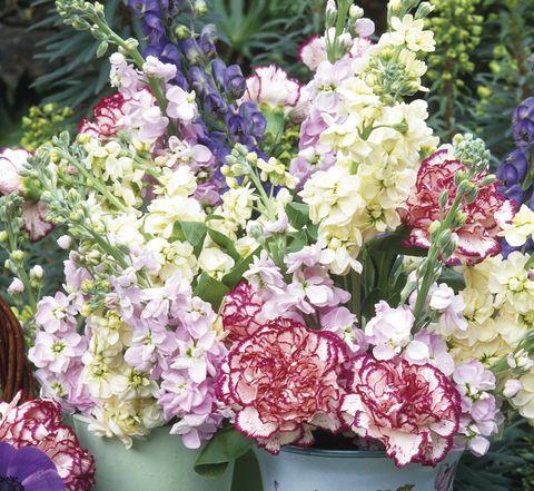 Flor de alhelí