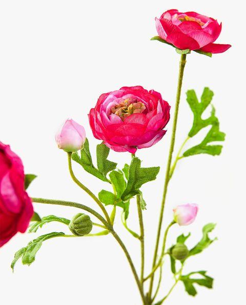 Ranúnculo rosa fucsia artificial