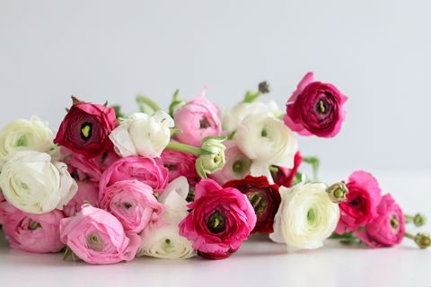 Flower, Pink, persian buttercup, Cut flowers, Bouquet, Rose, Garden roses, Plant, Rose family, Petal,
