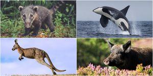 rare wildlife UK