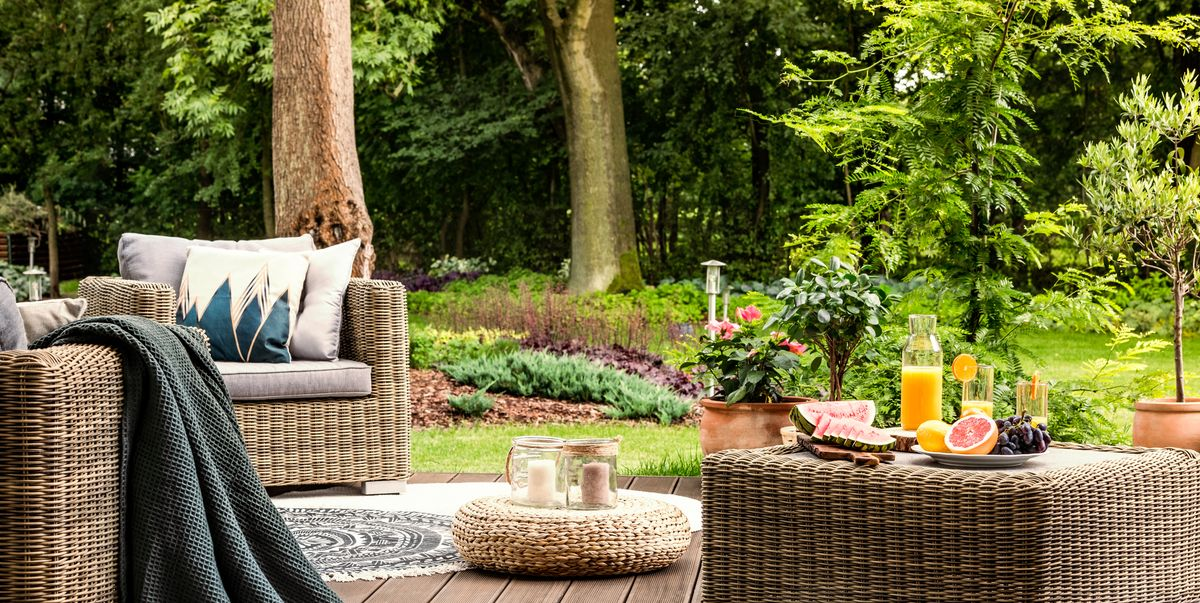 10 Best Trees for Year-Round Privacy in Your Backyard