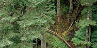 Media: Rave Run: Salt Creek Falls Trail, Oregon
