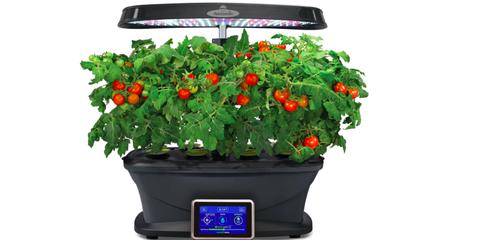 Flowerpot, Plant, Flower, Houseplant, Solanum, Flowering plant, Cherry Tomatoes, Tomato, Herb, Lantana,