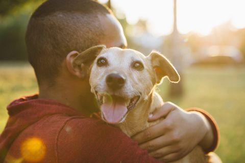 Vue arrière d'un jeune homme embrasse son petit chien