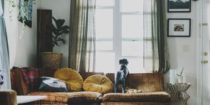 Rear view of dog looking through window while standing on sofa at home