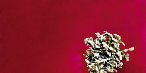 Red, Magenta, Maroon, Still life photography, Macro photography,