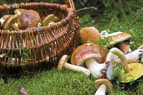 Setas, hongos y champiñones