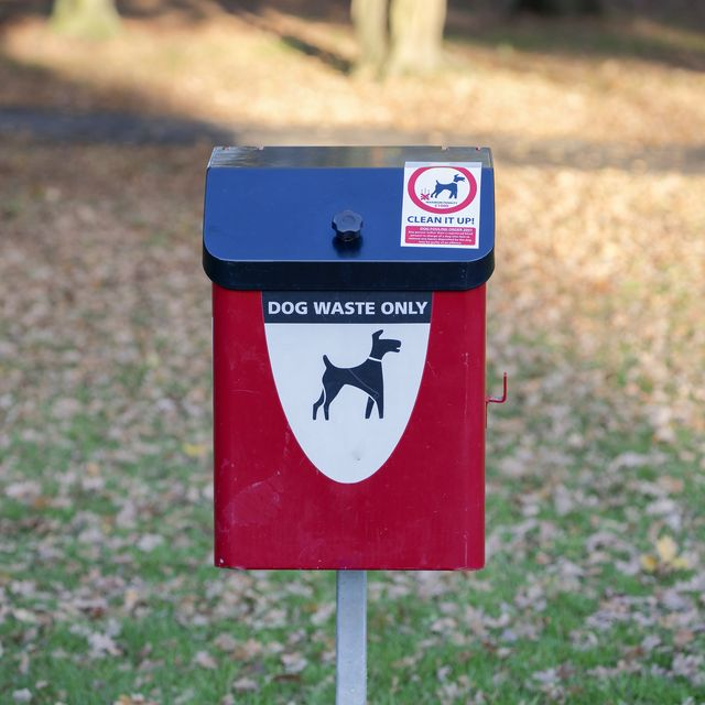 rise in pet ownership leads to abandoned dog waste on walks, says new study