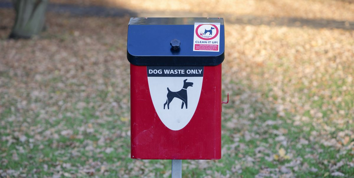 Dog owners confess why they don't pick up their dog's poo on walks – but there is a solution