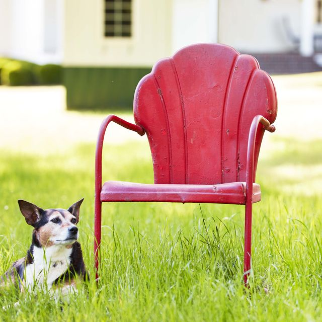red lawn chair and dog