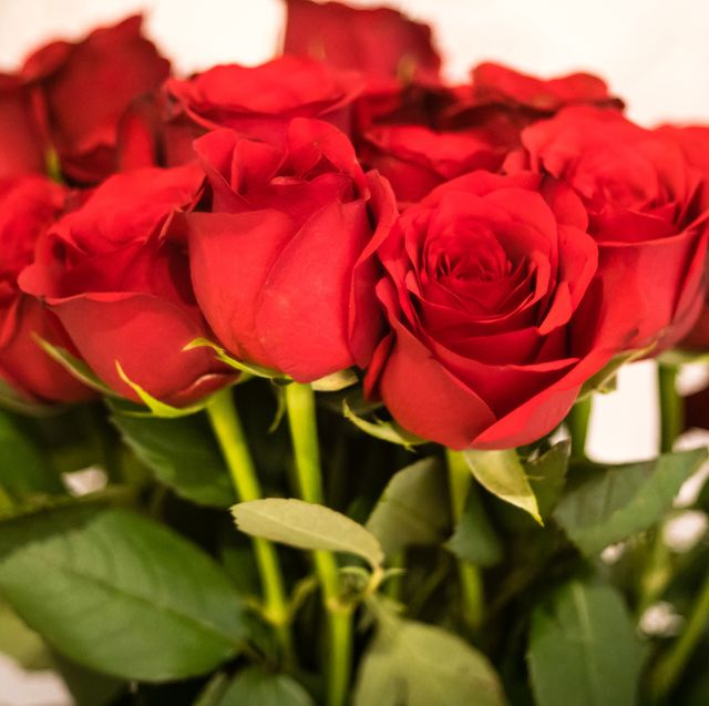 a classic bunch of red roses for valentines day