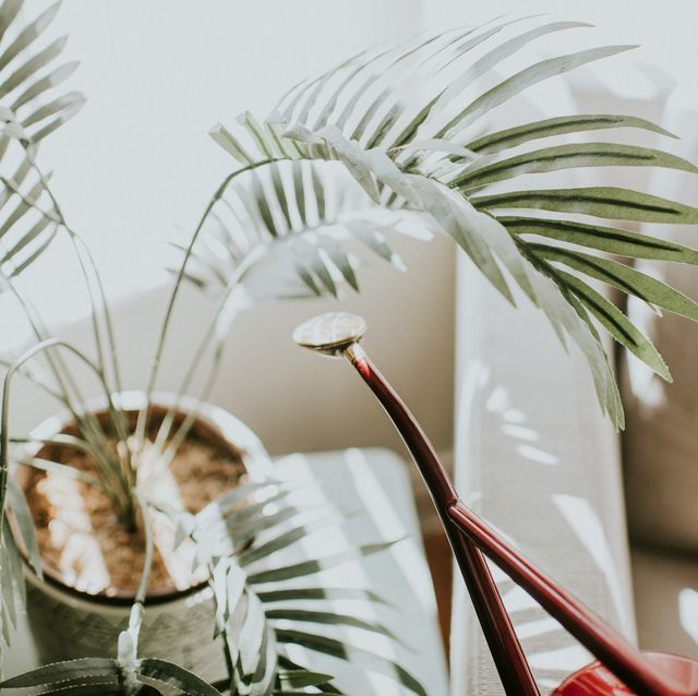 the surprising thing that can help your houseplants thrive
