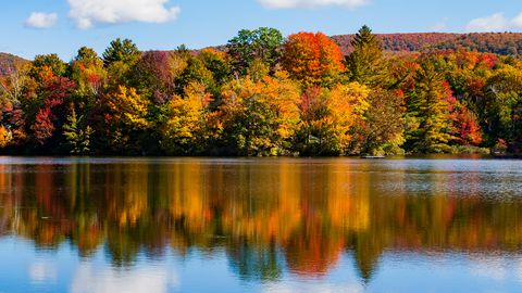 Reflection of autumn trees on water, Sallys Pond, West Bolton, Quebec, Canada