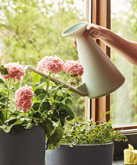 Flowerpot, Green, Flower, Plant, Pink, Botany, Watering can, Houseplant, Hydrangea, Garden,