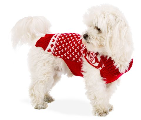 Se hai un cane o un gatto questo è il momento giusto per fargli un regalo di Natale e dimostrargli quanto lo ami.