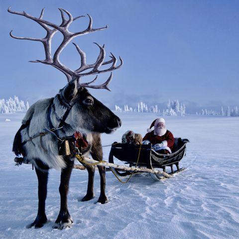 reindeer jokes santa