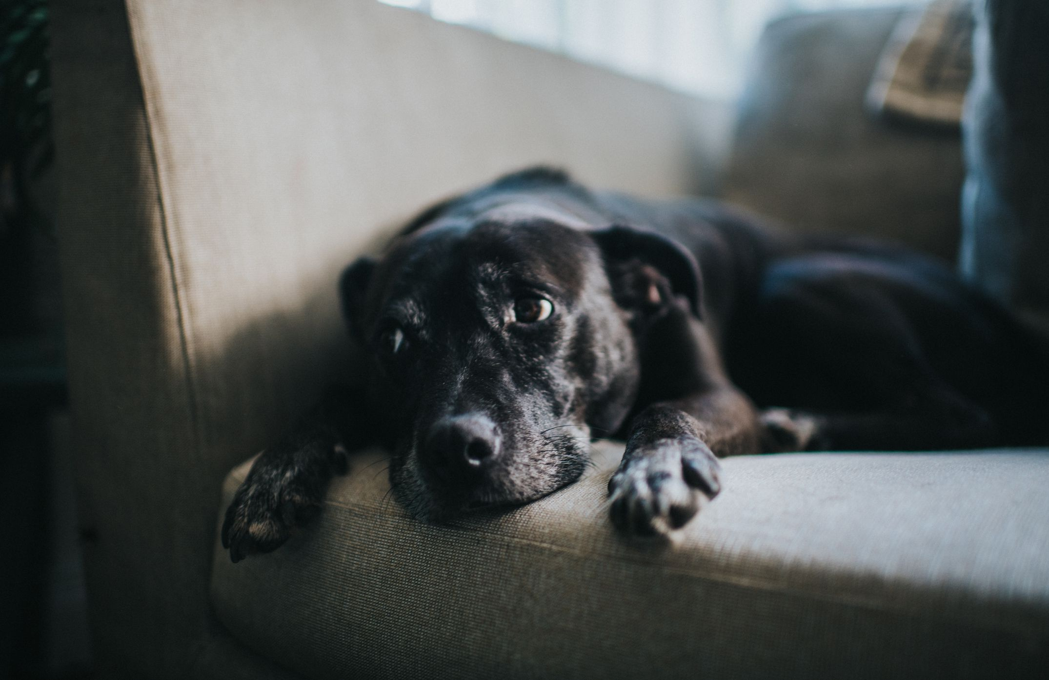 9 signs your dog is depressed