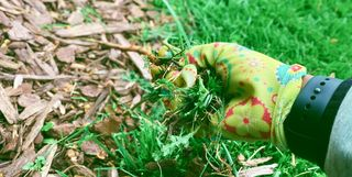 Dobbies Garden Centres Launch Living Wall Planters Vertical Garden
