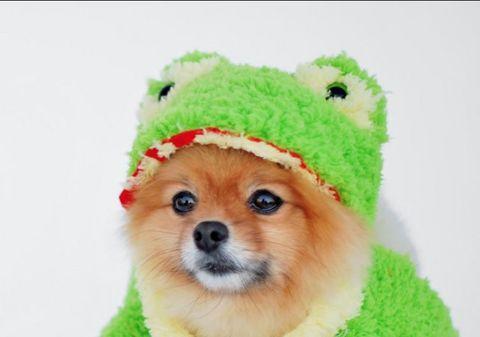repurposed teddy bear