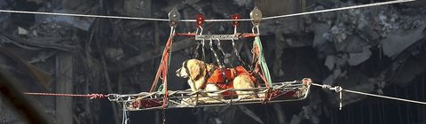 A rescue dog is transported out of the debris of the World Trade Center.