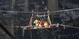 2001年に起きたアメリカ同時多発テロ事件の現場で活躍した救助犬