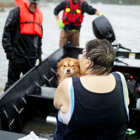 People, Human, Canidae, Companion dog, Vehicle,