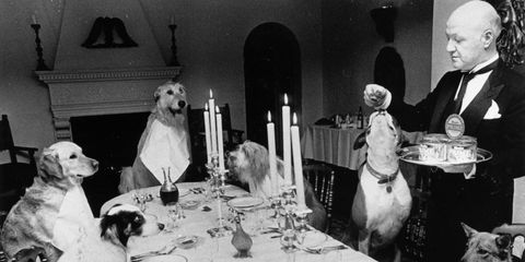 Restaurantes que aceptan perro o mascota
