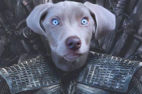 Retrato de un perro en el trono de hierro de la serieJuego de Tronos
