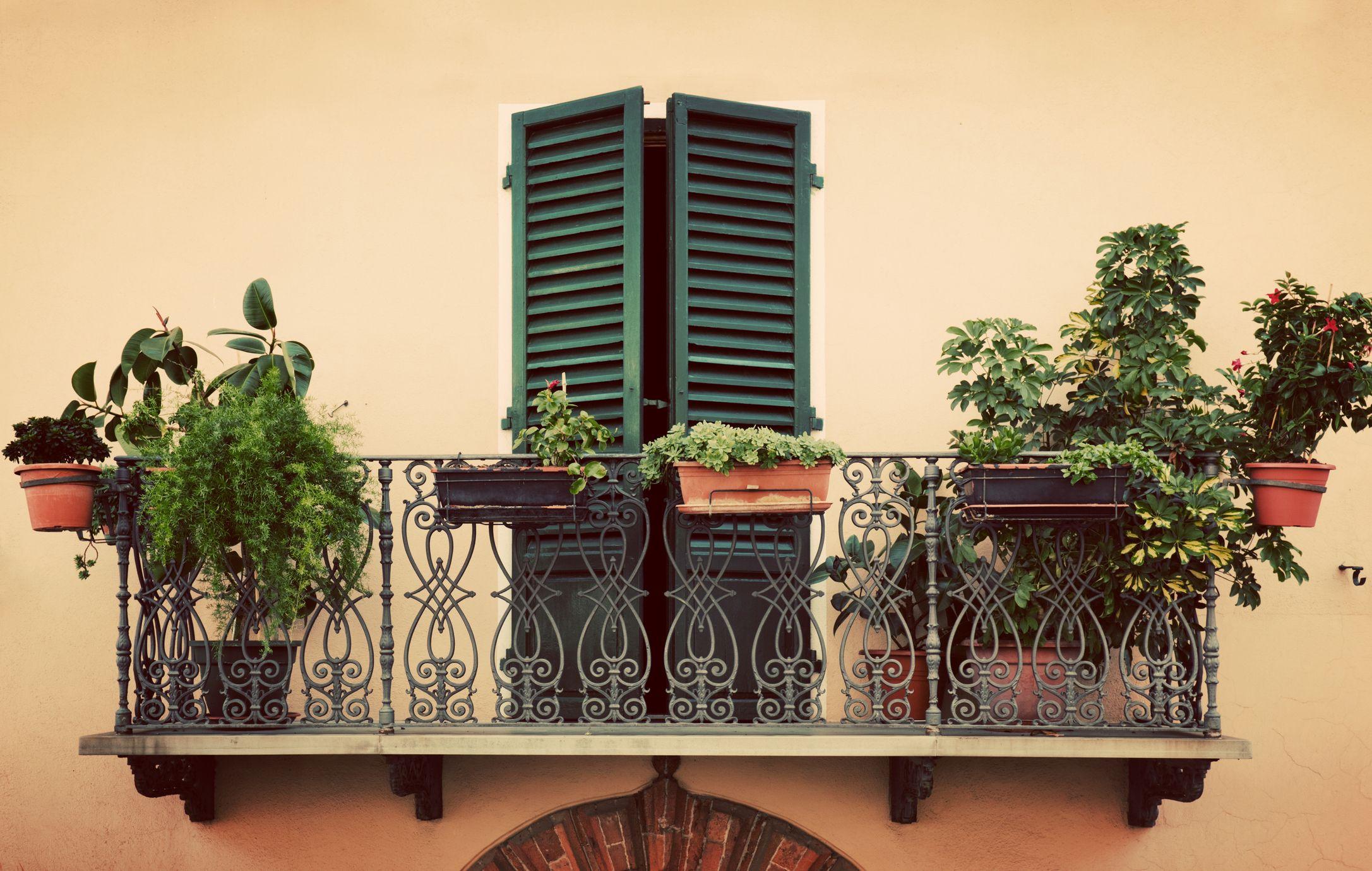 Clematis Resistenti Al Freddo le migliori piante da balcone e la guida a come sceglierle