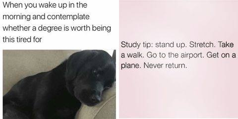 16 revision memes that prove the struggle is real