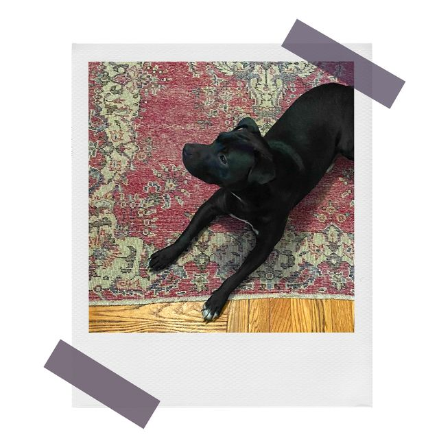 dog on vintage revival rugs
