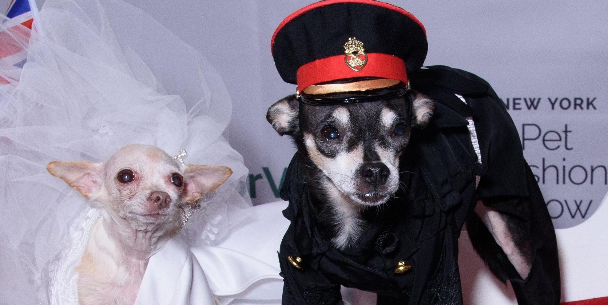 Forget Fashion Week, New York's 'Pet Fashion Show' Was Full Of Dogs In Amazing Costumes