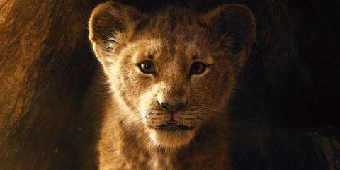 rey leon amy sedaris humorista personaje nuevo