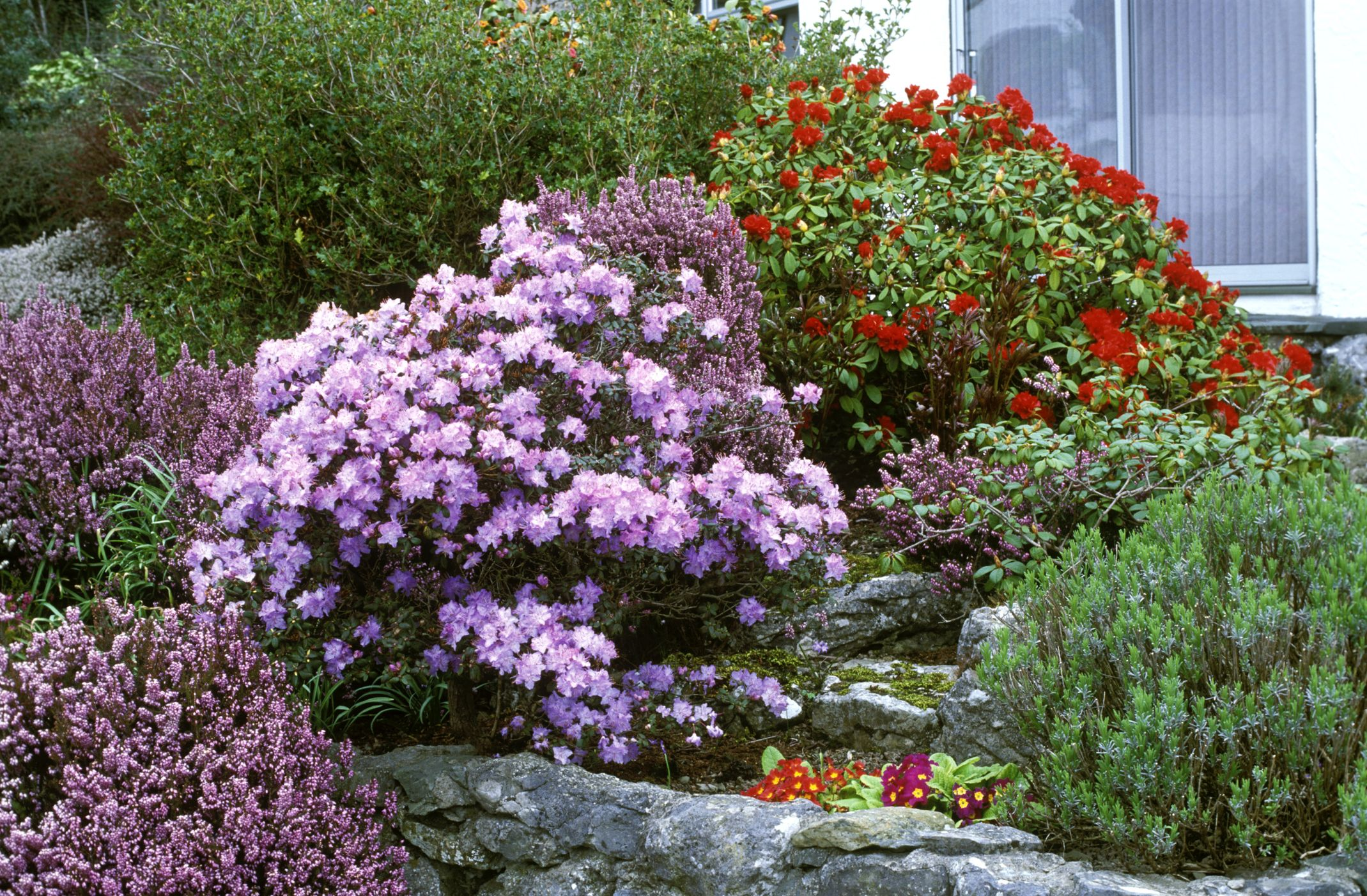 20 Best Flowering Shrubs for a Garden Bursting With Blooms
