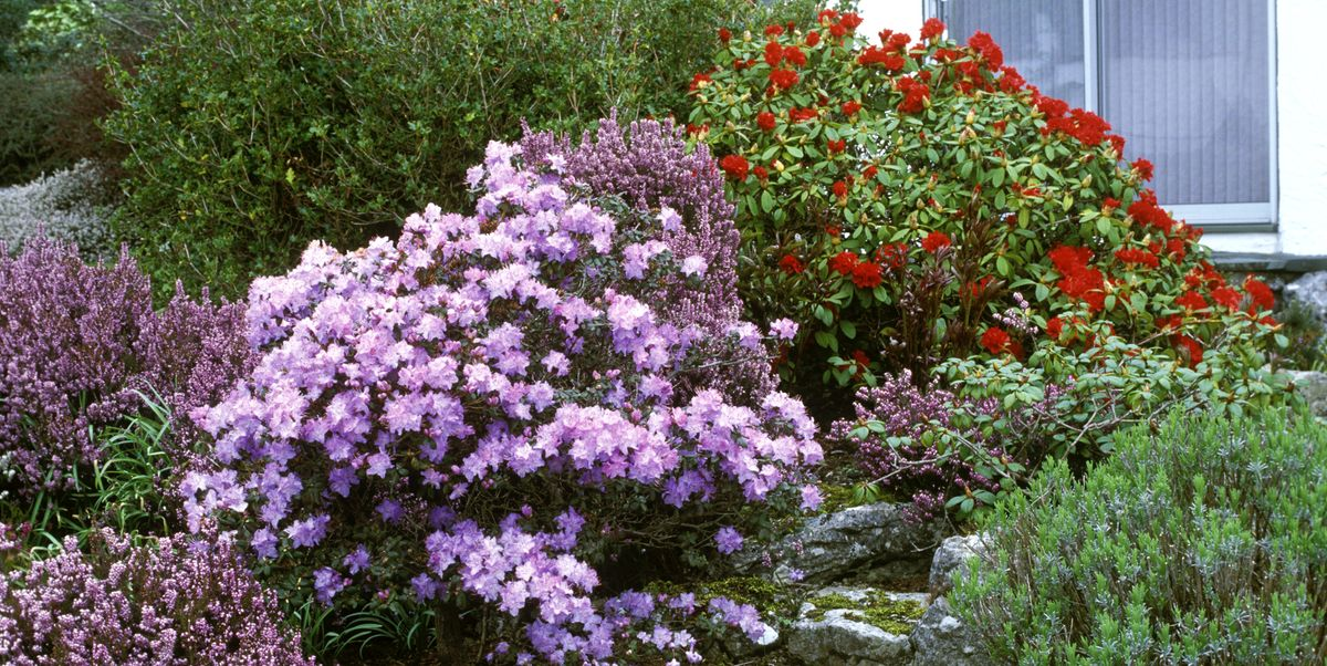 These 20 Flowering Shrubs Will Fill Your Garden With Blooms