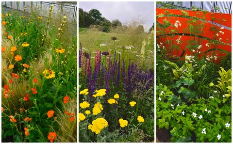 Planting Schemes For Borders Summer Border Plant Combinations