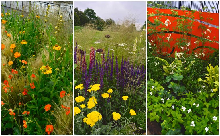 Planting schemes for borders summer border plant combinations rhs chatsworth flower show borders workwithnaturefo