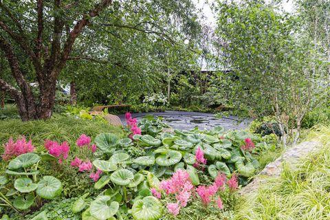RHS Hampton Court Palace Garden Festival 2019
