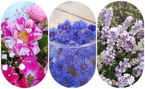 Hampton Court Palace Floral Trends