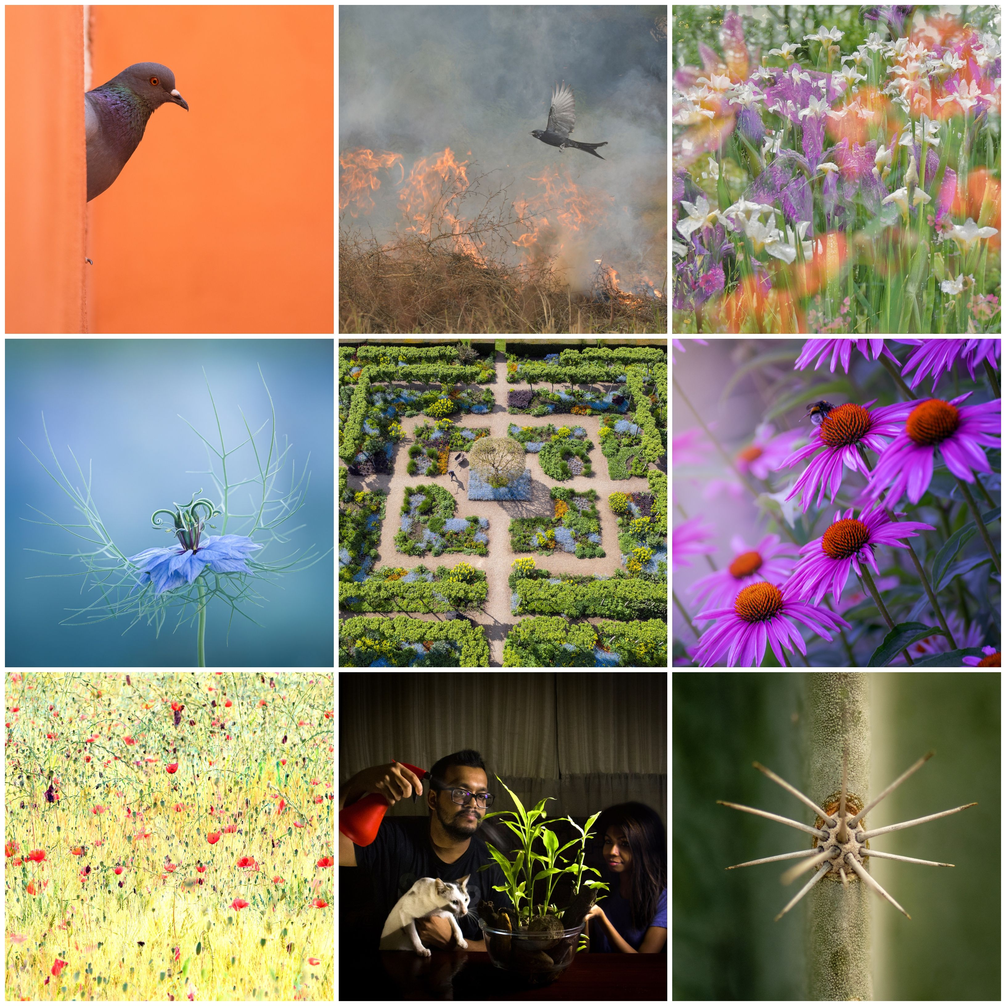RHS Photographic Competition 2021: see the winning photos